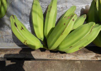 Bluggoe Grenada