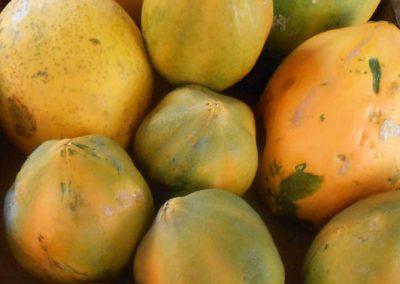 Papaya Grenada